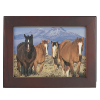 USA, Wyoming, near Cody Group of horses, Heart Keepsake Box