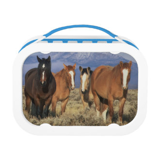 USA, Wyoming, near Cody Group of horses, Heart Lunch Boxes