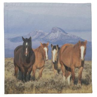 USA, Wyoming, near Cody Group of horses, Heart Napkin