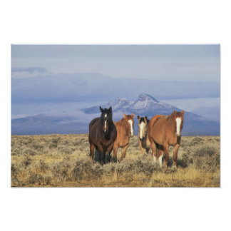 USA, Wyoming, near Cody Group of horses, Heart Photo Print