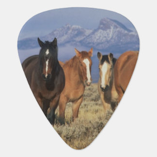 USA, Wyoming, near Cody Group of horses, Heart Plectrum