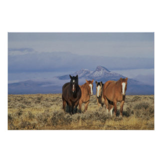 USA, Wyoming, near Cody Group of horses, Heart Poster