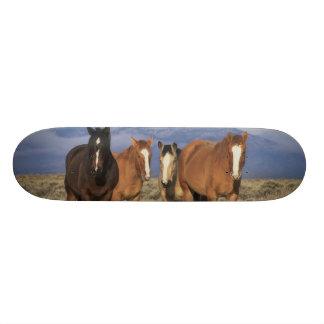 USA, Wyoming, near Cody Group of horses, Heart Skate Decks