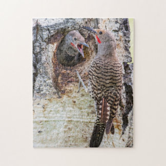 USA, Wyoming, Northern Flicker male feeding Puzzles