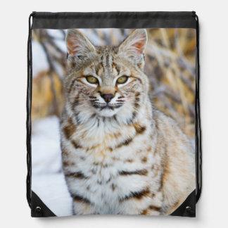 USA, Wyoming, Portrait of Bobcat sitting Drawstring Bag