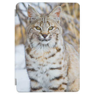 USA, Wyoming, Portrait of Bobcat sitting iPad Air Cover