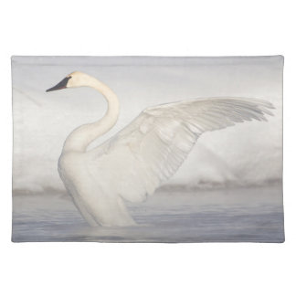 USA, Wyoming, Trumpeter Swan stretches wings Placemat