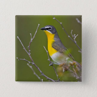 USA, Wyoming, Yellow-breasted Chat Icteria 15 Cm Square Badge