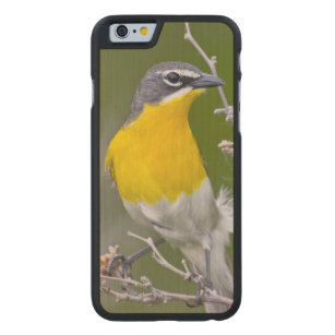 USA, Wyoming, Yellow-breasted Chat Icteria 2 Carved Maple iPhone 6 Case