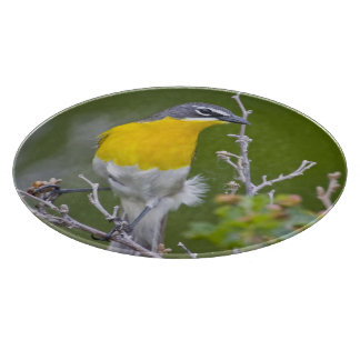 USA, Wyoming, Yellow-breasted Chat Icteria 2 Cutting Board