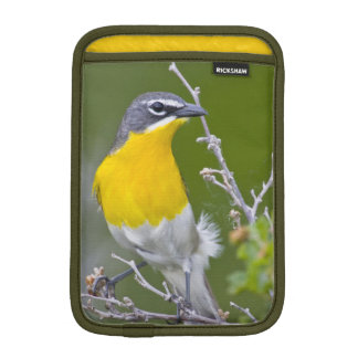 USA, Wyoming, Yellow-breasted Chat Icteria 2 iPad Mini Sleeve