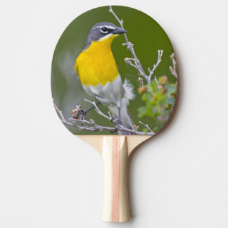 USA, Wyoming, Yellow-breasted Chat Icteria 2 Ping Pong Paddle