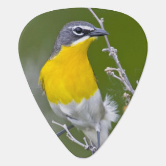 USA, Wyoming, Yellow-breasted Chat Icteria 2 Plectrum