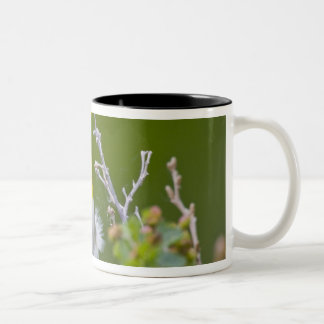 USA, Wyoming, Yellow-breasted Chat Icteria 2 Two-Tone Coffee Mug
