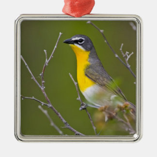 USA, Wyoming, Yellow-breasted Chat Icteria Silver-Colored Square Decoration