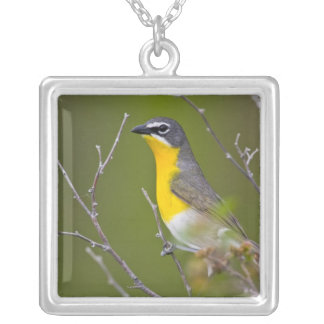 USA, Wyoming, Yellow-breasted Chat Icteria Silver Plated Necklace