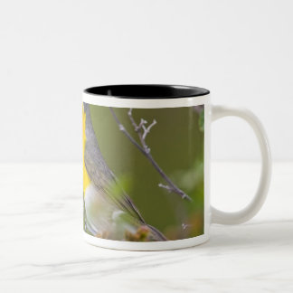 USA, Wyoming, Yellow-breasted Chat Icteria Two-Tone Coffee Mug