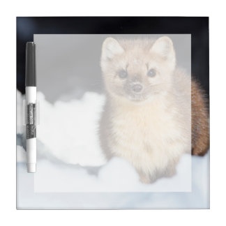 USA, Wyoming, Yellowstone National Park 2 Dry Erase Board