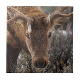 USA, Wyoming, Yellowstone National Park 3 Tile