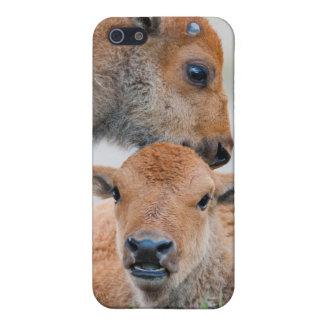 USA, Wyoming, Yellowstone National Park, A bison Case For The iPhone 5