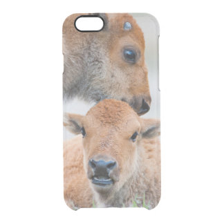 USA, Wyoming, Yellowstone National Park, A bison Clear iPhone 6/6S Case