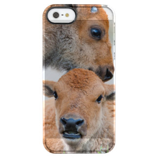 USA, Wyoming, Yellowstone National Park, A bison Clear iPhone SE/5/5s Case
