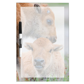 USA, Wyoming, Yellowstone National Park, A bison Dry Erase Whiteboard