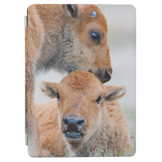 USA, Wyoming, Yellowstone National Park, A bison iPad Air Cover
