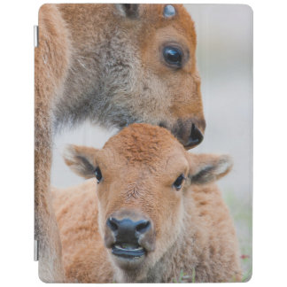 USA, Wyoming, Yellowstone National Park, A bison iPad Cover