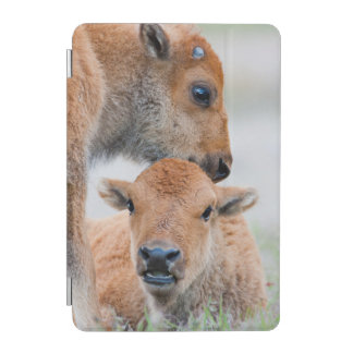 USA, Wyoming, Yellowstone National Park, A bison iPad Mini Cover