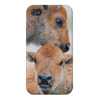 USA, Wyoming, Yellowstone National Park, A bison iPhone 4/4S Cover