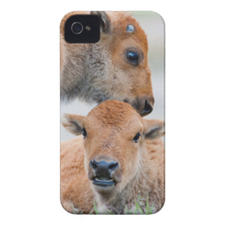 USA, Wyoming, Yellowstone National Park, A bison iPhone 4 Case-Mate Cases