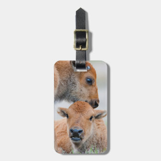 USA, Wyoming, Yellowstone National Park, A bison Luggage Tag