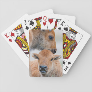 USA, Wyoming, Yellowstone National Park, A bison Poker Deck