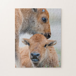 USA, Wyoming, Yellowstone National Park, A bison Puzzle