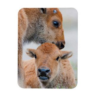 USA, Wyoming, Yellowstone National Park, A bison Rectangular Photo Magnet