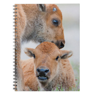 USA, Wyoming, Yellowstone National Park, A bison Spiral Notebook
