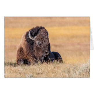 USA, Wyoming, Yellowstone National Park, Bison Card
