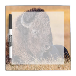 USA, Wyoming, Yellowstone National Park, Bison Dry Erase Board