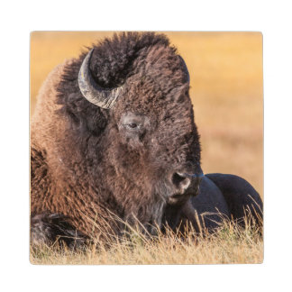 USA, Wyoming, Yellowstone National Park, Bison Wood Coaster