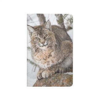 USA, Wyoming, Yellowstone National Park, Bobcat 1 Journal