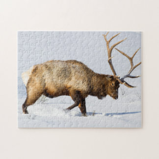 USA, Wyoming, Yellowstone National Park, Bull 1 Jigsaw Puzzle
