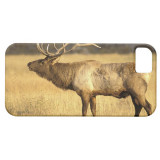 USA, Wyoming, Yellowstone National Park. Bull iPhone 5 Case