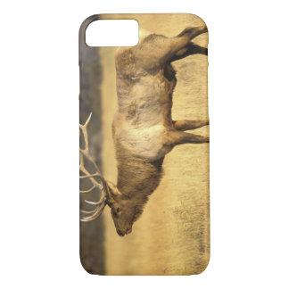 USA, Wyoming, Yellowstone National Park. Bull iPhone 7 Case