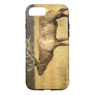 USA, Wyoming, Yellowstone National Park. Bull iPhone 8/7 Case