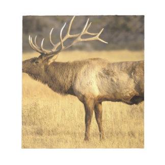 USA, Wyoming, Yellowstone National Park. Bull Notepad