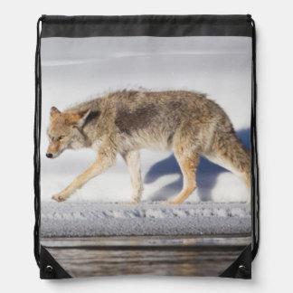 USA, Wyoming, Yellowstone National Park, Coyote 1 Drawstring Bag