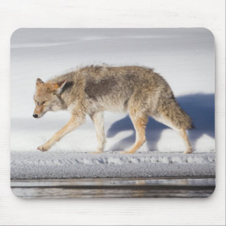 USA, Wyoming, Yellowstone National Park, Coyote 1 Mouse Pad