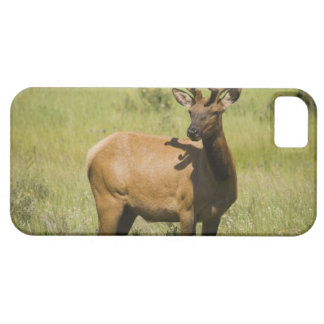 USA, Wyoming, Yellowstone National Park, Elk iPhone 5 Cases