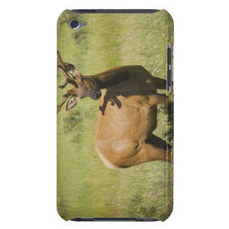 USA, Wyoming, Yellowstone National Park, Elk iPod Touch Cover
